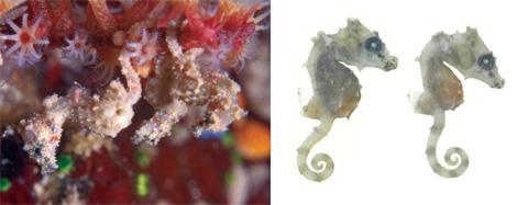 species.asu.edu ©